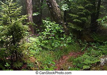Appalachian Trail - Early summer scene in the Smokey...