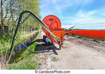 apparecchiatura spruzzante, su, strada, appresso, fossa, e, tulips