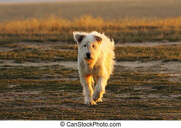 appareil photo, chien, approchant, berger