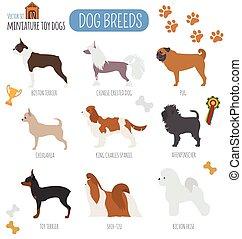appartamento, breeds., cane giocattolo, miniatura, set, icon., stile