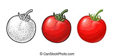 appartamento, inciso, isolato, illustrazione, vettore, bianco, tomato., intero