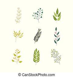 appartamento, pianta, astratto, vettore, verde, icona