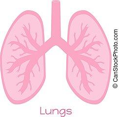 appartamento, polmoni, organs., illustrazione, visceri, interno, icona, style.