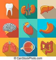 appartamento, set, cervelli, cuore, icone, organi, umano, -, lungo, stomach., fegato, intestino, vettore, polmoni, interno, uggia, denti, occhio, reni
