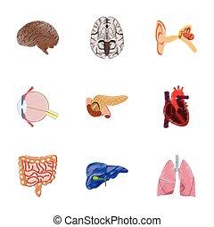 appartamento, stile, montaggio, umano, ombreggiatura, organi, icona