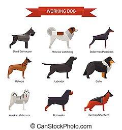 appartamento, stile, set, icone, isolato, illustrazione, cane, fondo., emblemi, vettore, bianco, allevare, design.