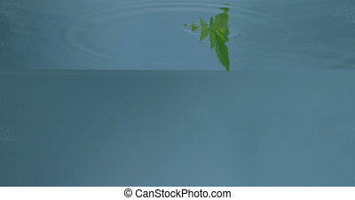 Appearing of tropic green leaf under water. - Slow motion of...
