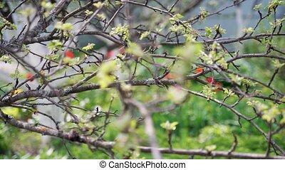 appel, bladeren, boompje, gematigd, groene, tak, kleine,...