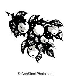 appel, fruit, bladeren, boompje, illustratie, hand, tak, monochroom, getrokken