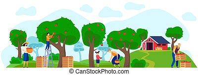 appel, illustratie, tuin, samen, boerderij, gezin, werkende , boomgaard, vector
