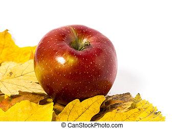 appeltjes , met, autumn leaves