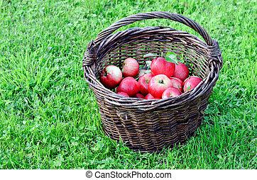 appeltjes , rood