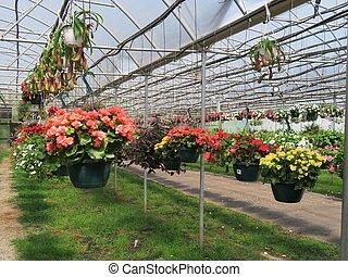 appendere, cesti, pieno, con, fiori coloriti, in, uno, serra