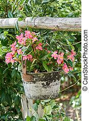 appendere, vaso, con, begonia, giardino