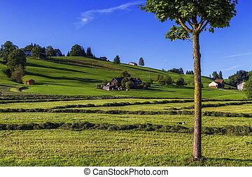 Appenzell landscape, Switzerland - Appenzell hill landscape...