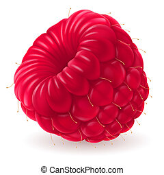 Appetizing fresh raspberry