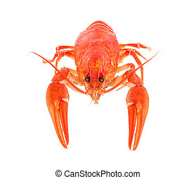 boiled crawfish on a white background