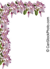 Apple Blossom Border