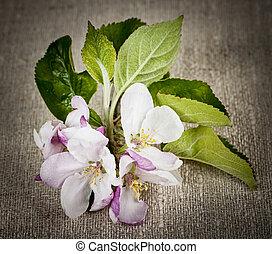 Apple blossom on linen