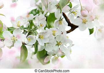 Spring blossoms against a soft focus background