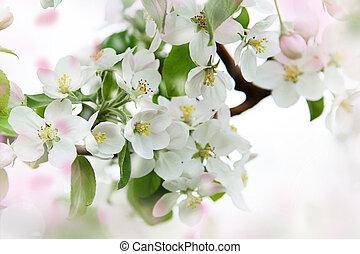 Apple blossoms against a soft focus background