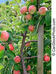 Apple business 2