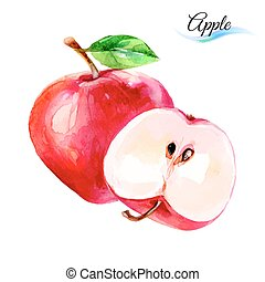 Apple drawing watercolor isolated on white background