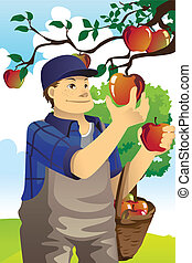 Apple farmer - A vector illustration of a farmer picking ...