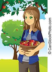 Apple farmer - A vector illustration of a farmer picking ...