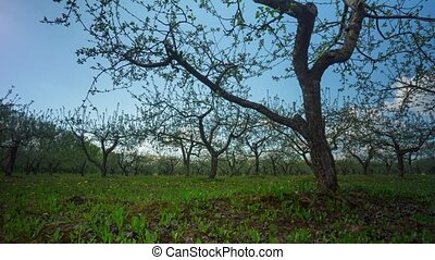apple garden, time-lapse