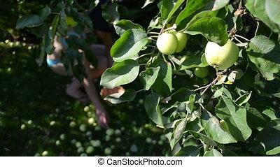 apple gather woman bra