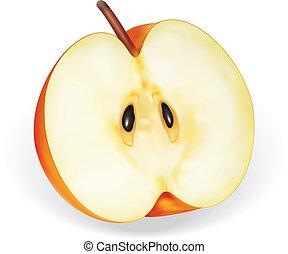 Detailed illustration for apple half