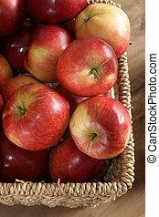 Apple harvest - Autumn apple harvest. Variety Malus...