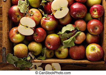 Apple harvest in a wooden crate