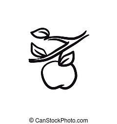 Apple harvest sketch icon.