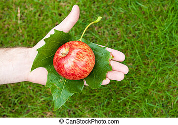 Apple in hand with leaves on the background of grass