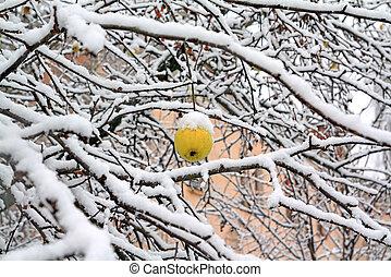 apple in snow
