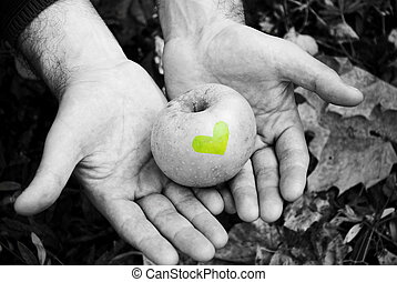 apple in the hands of man