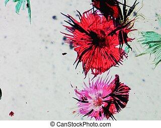 Apple micrograph