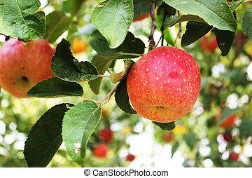 Apple on a tree macro