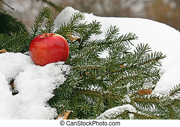 Apple on snow