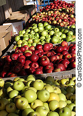 Apples in bins at an apple orchard.