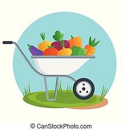 Apple picking. Garden wheelbarrow with apple. Flat vector.