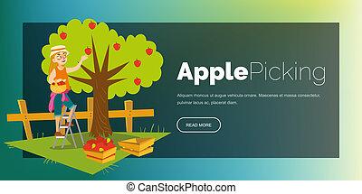 Apple picking horizontal banner