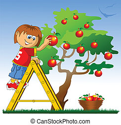 apple picking - little boy collects red apples (vector...