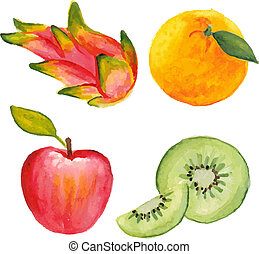 Apple, qiwi, orange and dragon fruit. Hand drawn in watercolor technique