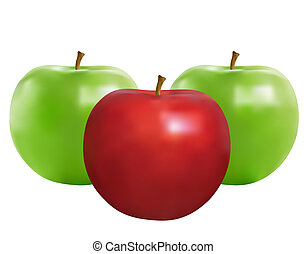 Apple - Realistic illustration of the ripe apples isolated...