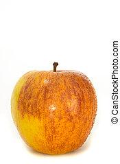 Apple - Royal Gala - The Royal Gala variety of apple.