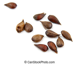 Apple seeds on white background pictures - Search ...