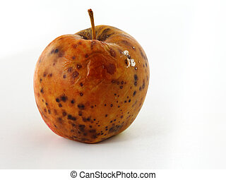 apple spoiled on white background - spoiled one bad red...